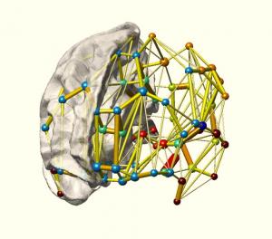 brainnetwork2